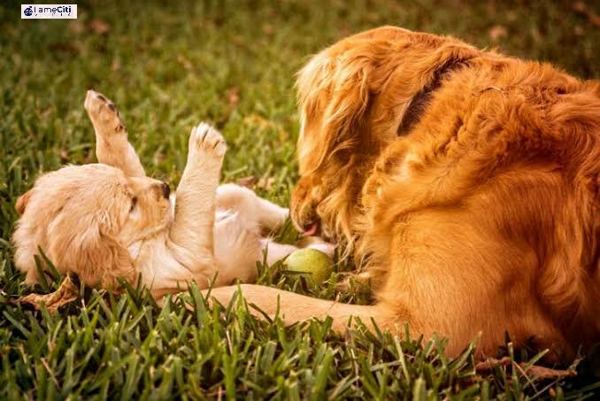 Latest: Pregnant Dogs Bea
